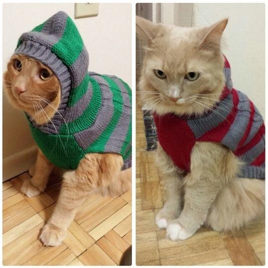 Cat hoodies!