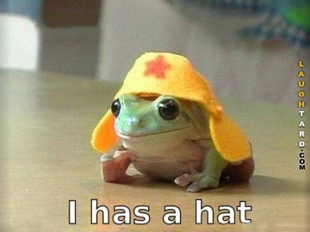 I has a hat | Follow gwyl.io or visit gwyl.io/ for more diy/kids/pets videos #funnypics #funny #lol