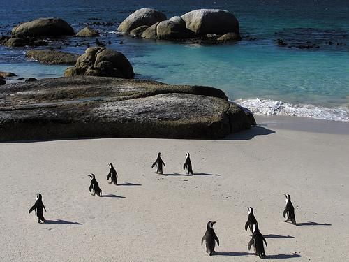 Google Image Result for http://oursurprisingworld.com/wp-content/uploads/2008/01/boulders_beach_south_africa_01.jpg
