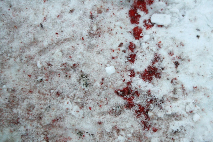 trail of blood in the snow