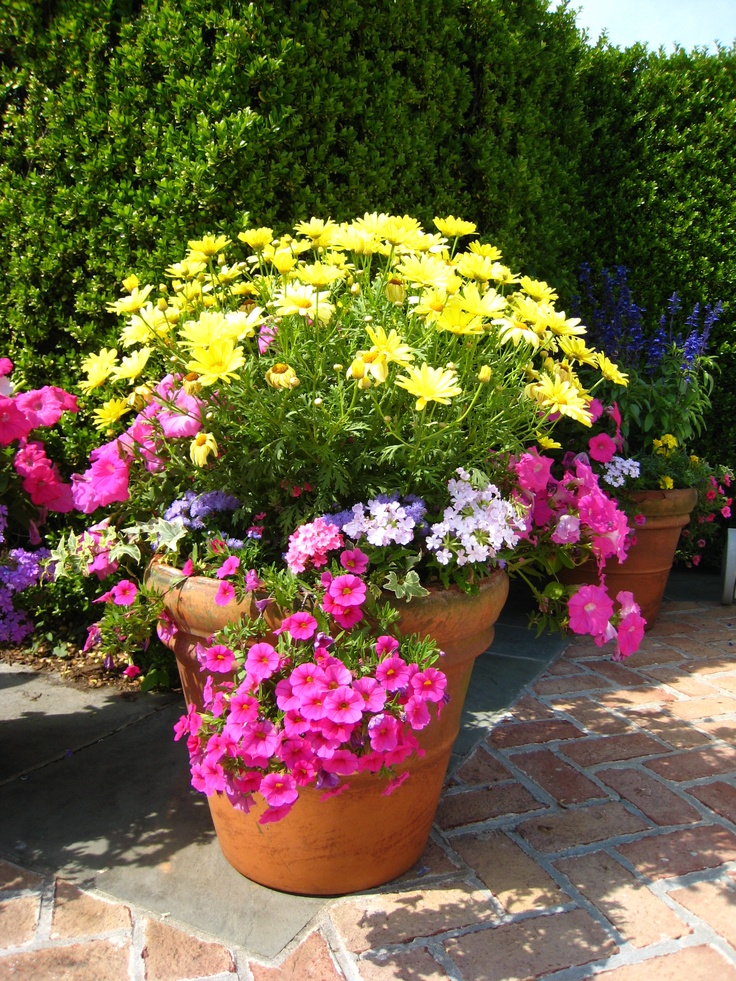 18 best images about spring garden container on pinterest for Small garden ideas with pots