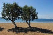 Skala Kallonis | Lesvos lesbos-eiland.webs.com lesvosgreece.gr