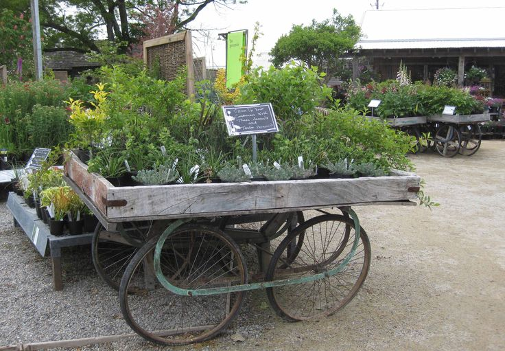 1474 best images about garden center ideas on pinterest for Idea center dilshad garden