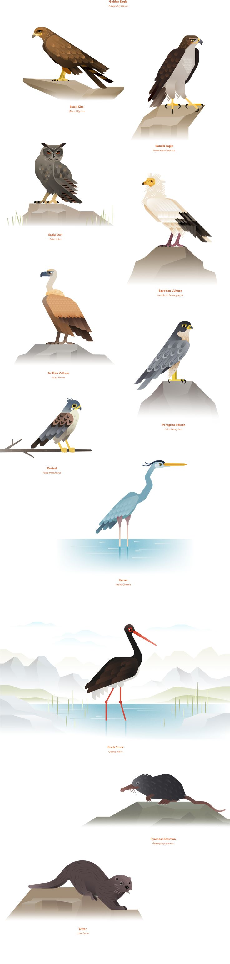 We have been commissioned by Seegno to illustrate the main native animal species…