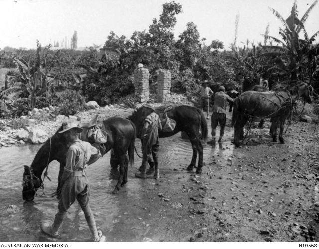 Palestine. c. 1917. Members of Australian Army Light Horse watering their horses near Jericho at Ain es Sultan which was also known as Elisha's Well. (Donor British Official Photograph Q12704)