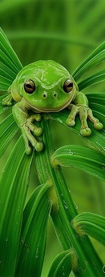 Frog. What a great post! We just absolutely love animals. Whether it's a dog, cat, bird, horse, fish, or anything else, animals are awesome! Don't you agree? -- courtesy of www.canoodlepets.com