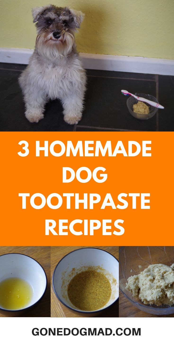 how to make dog toothpaste easy