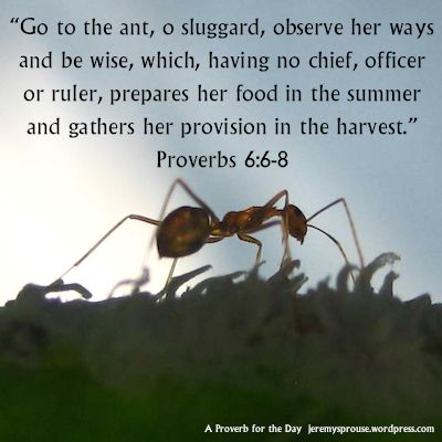 Ant Definition and Meaning - Bible Dictionary