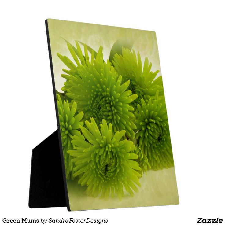 Green Mums Photo Plaque