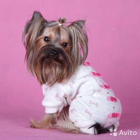 Одежда для маленьких собак комбинезон вязанный шик