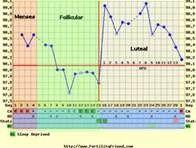 Ovulation Cycle in Women – Bing Images – Bailee 2C – # 2C #Bailee #Bing #Cycle …   – Pregnancy Calculator