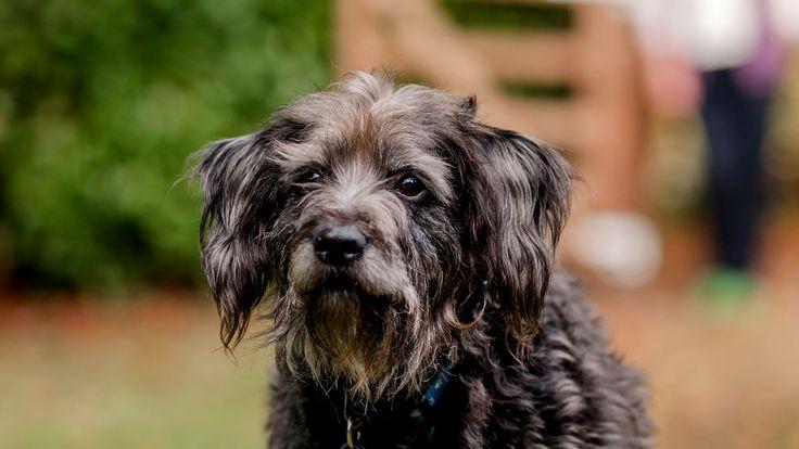 Petplan Pet insurance | Cheap pet insurance, Best pet ...