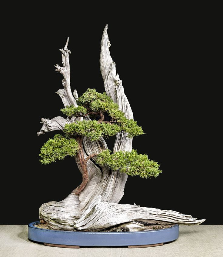 Bonsai through the eyes of someone who possesses the patience and skill to take photographs worthy of the subject