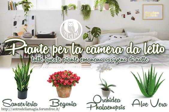 Oltre 25 fantastiche idee su piante della camera da letto su pinterest camera da letto - Piante ideali per camera da letto ...