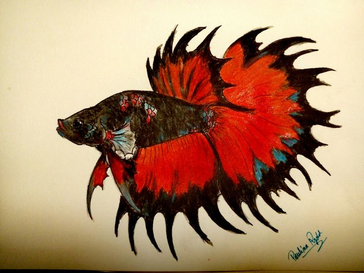 #bettafish #art #betta
