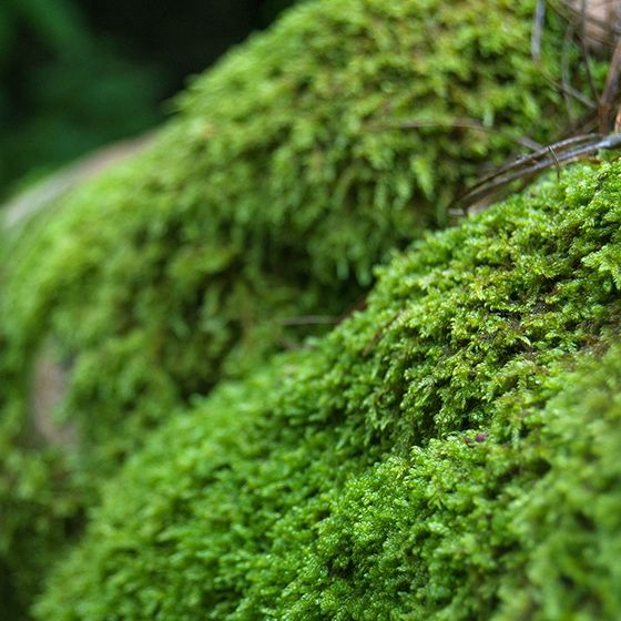 Green moss. 1000+ awesome free vector images, psd templates, icons, photos, mock-ups and more!