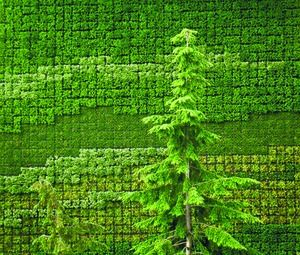 Green Walls Labyrinth Gardens Images Pinterest