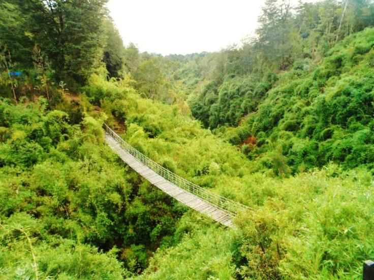 Verde que te quiero verde...   Parque Yayanes, Puqueldón, Chiloé
