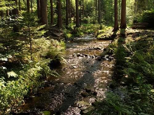 duitsland-hermannsweg-teutoburgerwald-wandelen-actief-silberbach-13-2_teutoburger_wald_silberbach2s_.jpg (500×375)