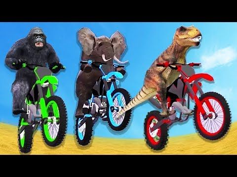 (15) Funny Animals Motor Cycle Race Little Baby Videos Learn Colors Animals Bike Race Motocross Videos - YouTube