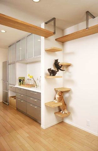 Cat shelves & wall climbing set up - make them happy, save your stuff from falling! I like how they used a narrow area, no need for the longer shelves, just short ones would be enough.