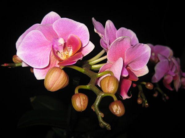 Орхидеи картинки (542 фото) скачать обои