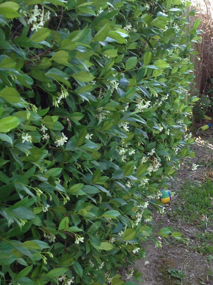 22 best images about cerca viva on pinterest sun - Cercas para jardin ...