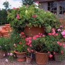 Gardening from living ect: Gardens Ideas, Terracotta Can, Gardens Design Ideas, Gardens Magazines, Country Gardens, English Gardens, Photo Galleries, Plants Questions,  Flowerpot