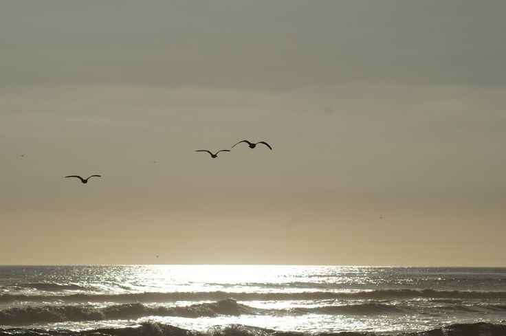 atardecer con Aves del Litoral central en Chile, V región