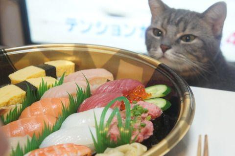 寿司とぬこ DSC05424 Japan