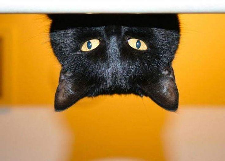 Картинки черный кот приколы, день