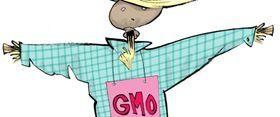 Forside til GMO debathæfte 2013