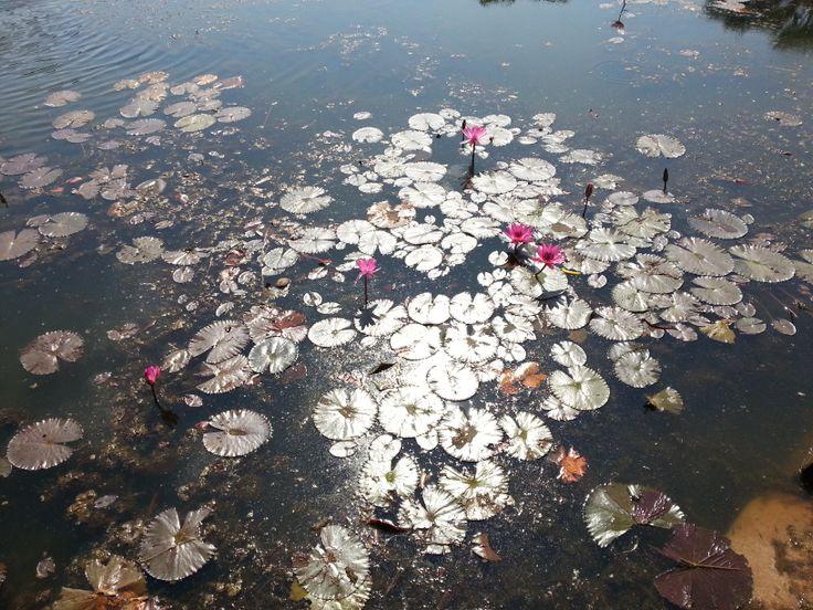Pond reflection near Angkor Wat