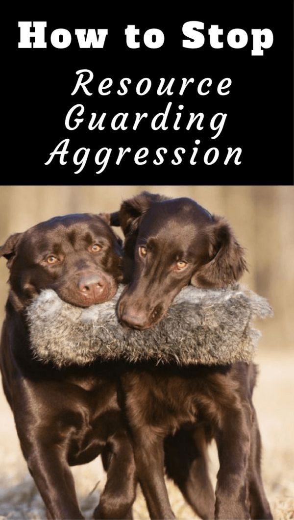 How To Stop Resource Guarding Aggression Between Dogs Food