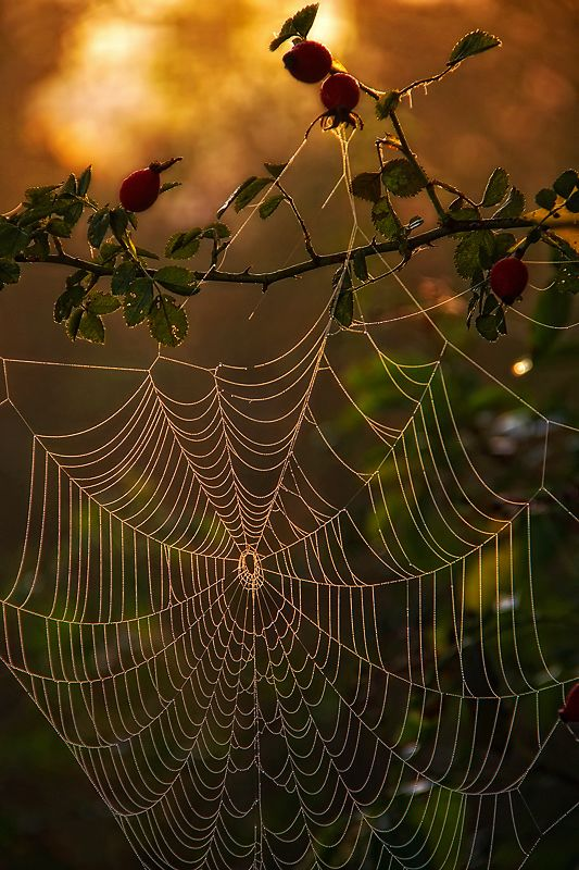 Hackley by  Peter Talos on 500px.com.  #spiderweb