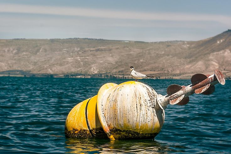 Bird On Buoy, Kinneret , Israel by Tom S. on 500px