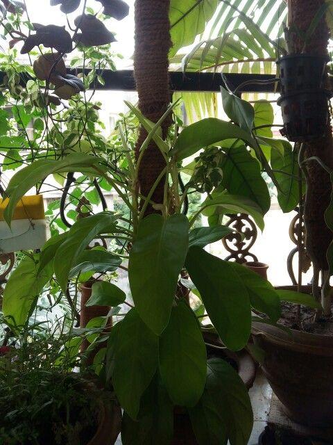 My small garden