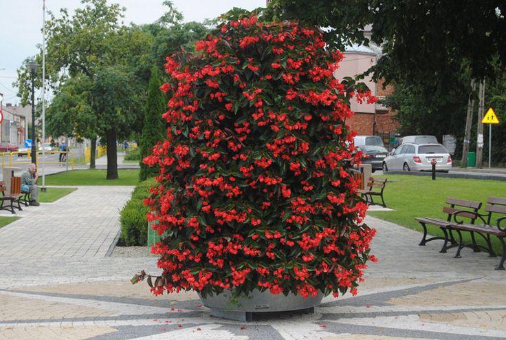 terra flower tower in włoszczowa
