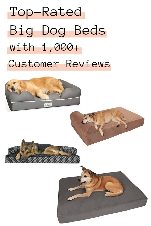 Top Rated Big Dog Beds With 1 000 Customer Reviews Big Dog Beds Dog Bed Big Dogs