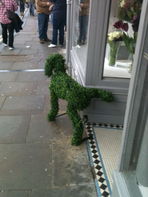 "Even topiary mutts just can't help themselves! Learn exactly what a ""topiary"" is here: http://landscaping.about.com/cs/lazylandscaping/g/topiary.htm"