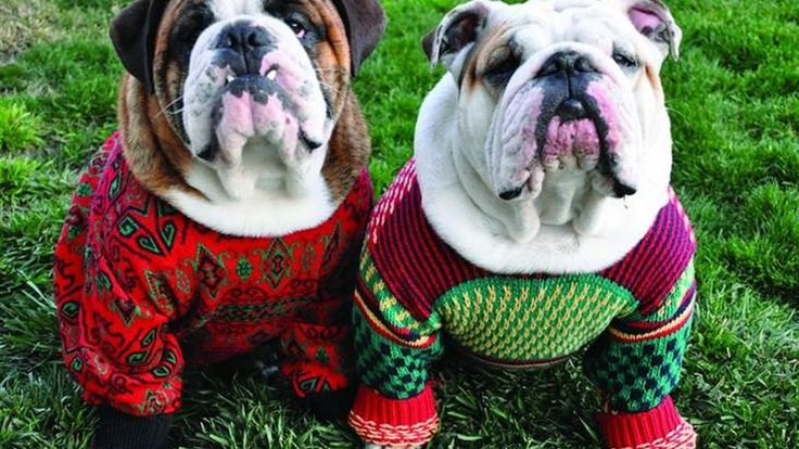 Cute Puppies Dressed Up For Christmas