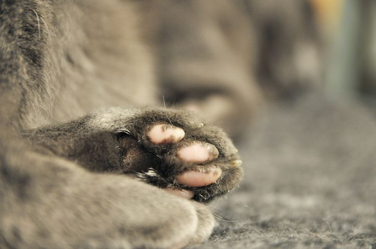 Cat paws. Minor corrections were made in Photoshop. Credit me if you are going to use it.