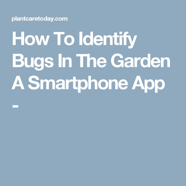 How To Identify Bugs In The Garden A Smartphone App -