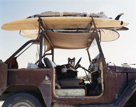 Serious case of envy of whoever has this awesome dog and awesome jeep. Wherever this is, we wish we were there.