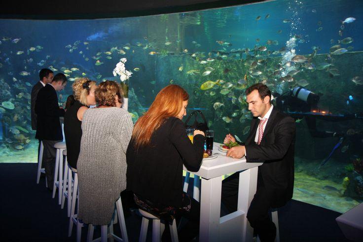 dinner @ Turkuazoo Aquarium