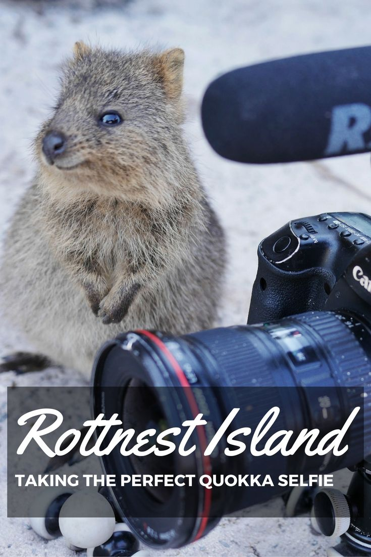 This itinerary will should you how to have the best day on Rottnest Island biking, snorkeling, seeing Pink lakes and taking the perfect quokka selfie!