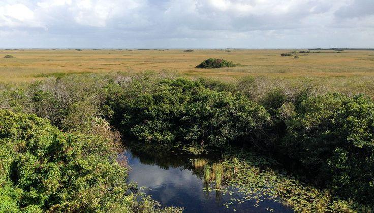 Parques nacionais: Everglades