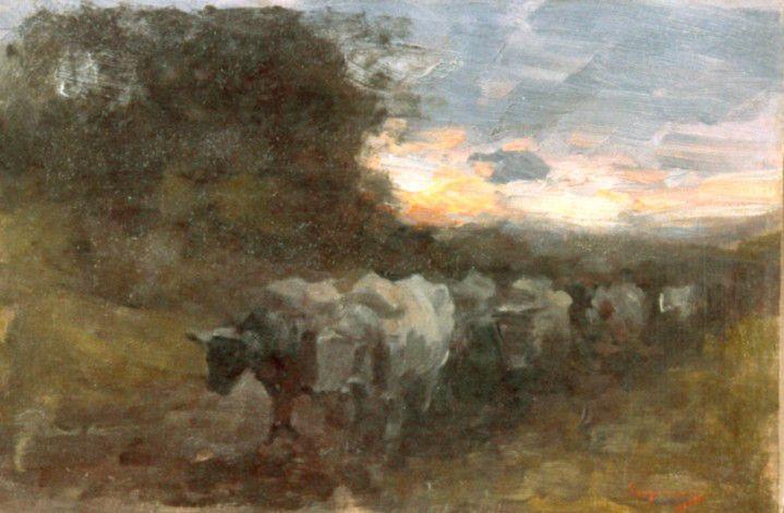 Car cu boi în apus de soare