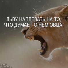 Каждое утро в Африке просыпается газель. Она должна бежать быстрее льва, иначе погибнет. Каждое утро в Африке просыпается и лев. Он должен бежать быстрее газели, иначе умрет от голода. Не важно кто ты — газель или лев. Когда встает солнце, надо бежать. #deng1vkarmane #мотивация #лев #цитаты #цитатывеликихмужчин #умныемысли #успех #правдажизни #высказывание #афоризма #советдня #умныефразы #вдохновение