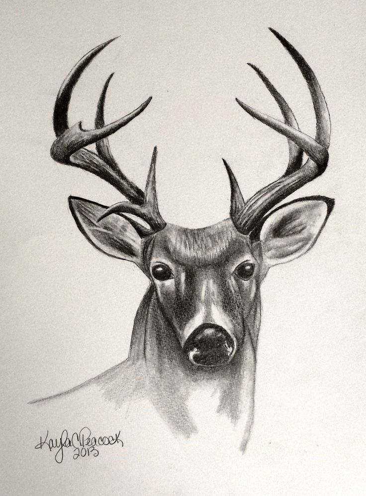 deer antlers drawing easy - photo #32
